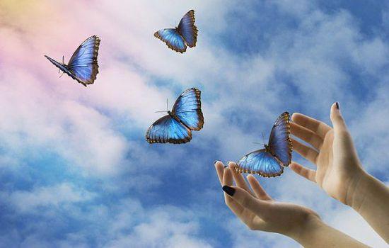 К чему снятся бабочки по толкованию разных сонников. К чему снятся бабочки девушкам и замужним женщинам