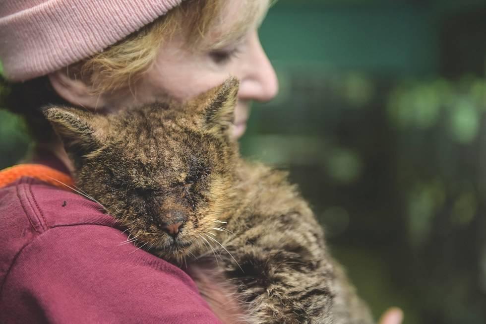 Никто не хотел касаться этого заразного кота, а потом одна женщина обняла его... Вот чем закончилась эта история