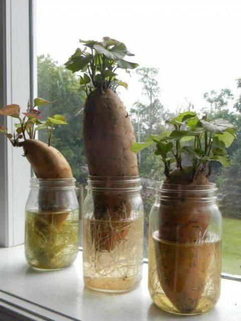 15 овощей, которые можно съесть и... вырастить снова!