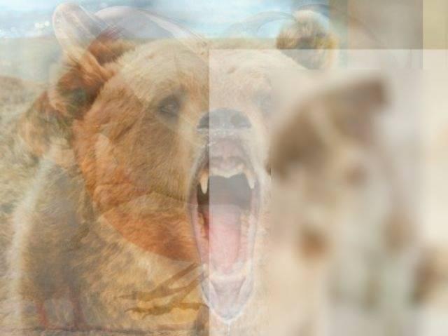 Тест на 1 минуту! Каких животных ты увидел здесь первыми, такой и характер