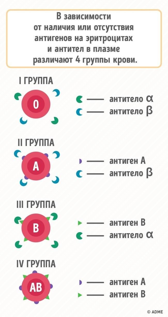 5жизненно важных причин знать группу крови всех членов семьи