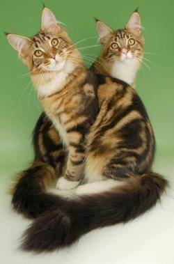 Кошка &8212; священное животное. Великое предназначение вашего пушистого любимца