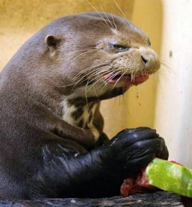 19 забавных проголодавшихся животных, глядя на которых невозможно не рассмеяться