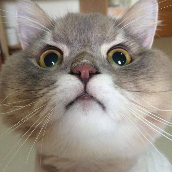 Знакомьтесь, это кот Bone Bone - настоящая знаменитость из Таиланда!