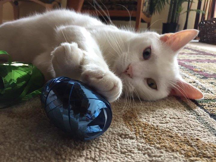 """""""Слепой"""" кот поразил всех, когда открыл свои потрясающе красивые глаза"""