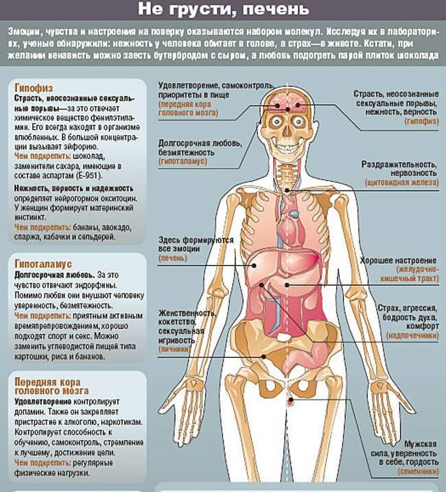 Злоба в печени, ненависть в желудке: к каким болезням приводят негативные эмоции