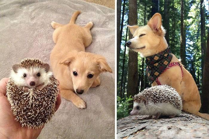Невероятно трогательные фото: звери, которые выросли вместе