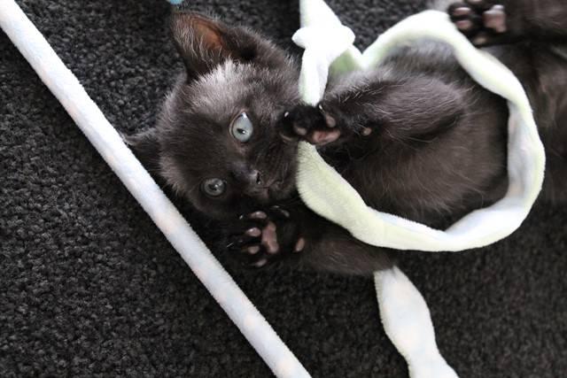 Этот котенок не на шутку удивил своих спасителей, когда начал менять цвет...