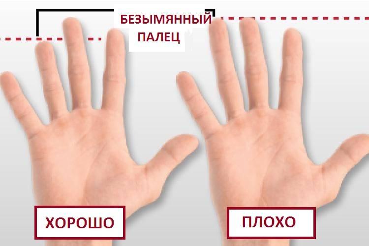 Ученые обнаружили, что длина безымянного пальца мужчины влияет на его сексуальные способности