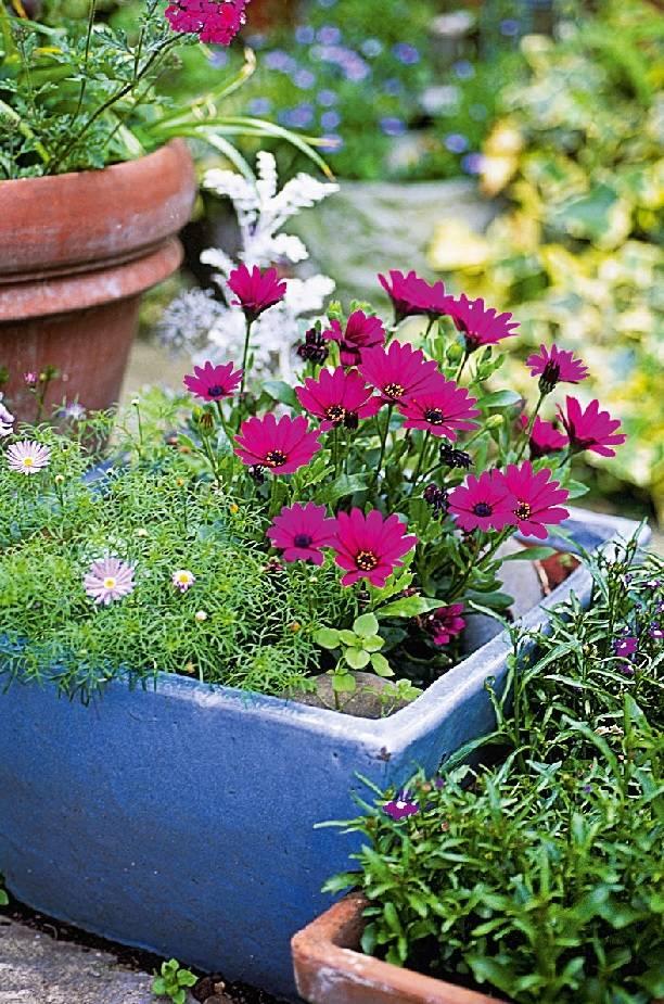 Самые красивые цветущие растения для вашего сада. Выбирайте!