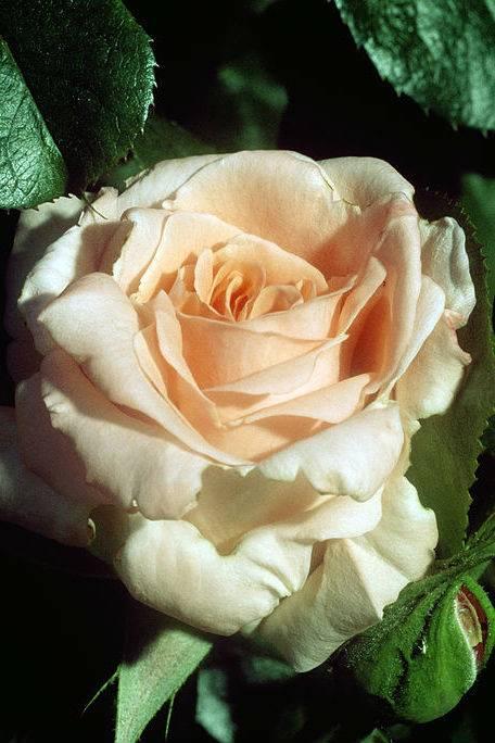 А вы знаете, что ваш цветок-талисман говорит о вашей личности?