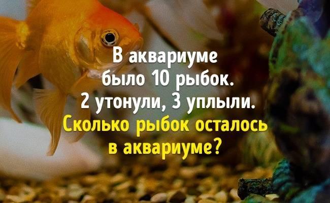 10хитрых вопросов, которые только притворяются простыми
