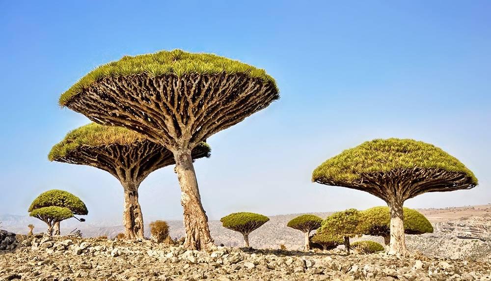 15мест наЗемле, которые выглядят как пейзажи сдругих планет