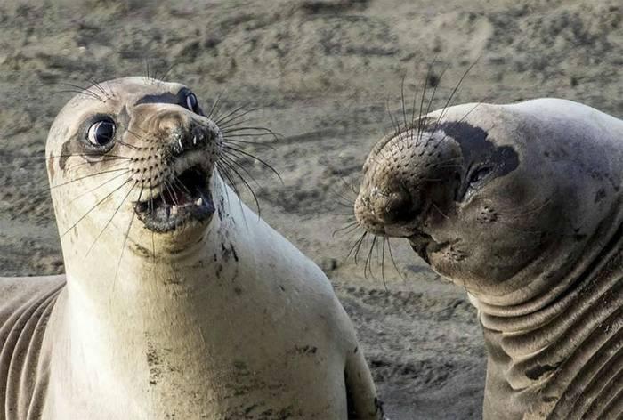 18 забавных фотографий животных, глядя на которые невозможно не рассмеяться