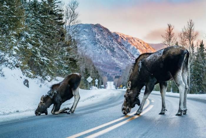 17 восхитительных снимков, которые открывают мир в совершенно неожиданном ракурсе