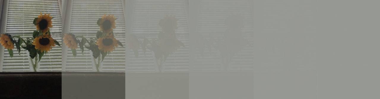 Звезда, лошадь, страус, дом — как незрячие представляют обычные вещи