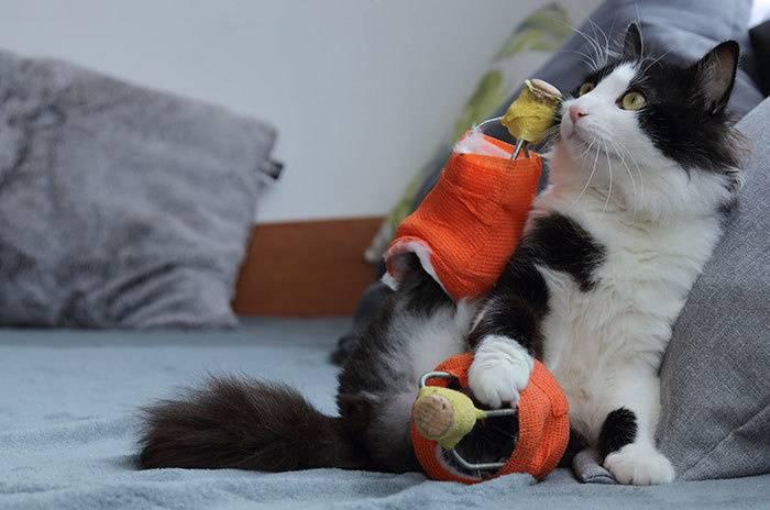 Кот, которому ампутировали задние лапки, снова может играть и бегать, благодаря специальным протезам!