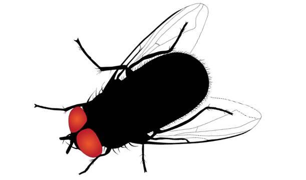 Кусают? Не кусают! Народные способы борьбы с комарами, мухами и осами