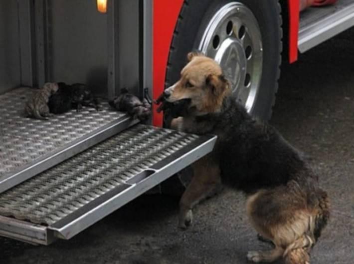 Пожарные заметили собаку, выбирающуюся из горящего дома. Но она была не одна...