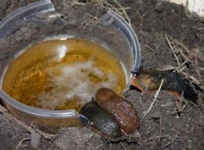 Без похмелья: 7 бытовых ситуаций, которые -разрулит- банка пива