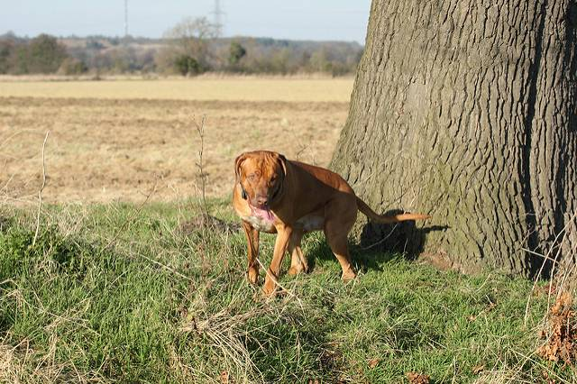 Когда собаку выкинули из машины, она долго бежала за ней вслед... Сердце кровью обливается!