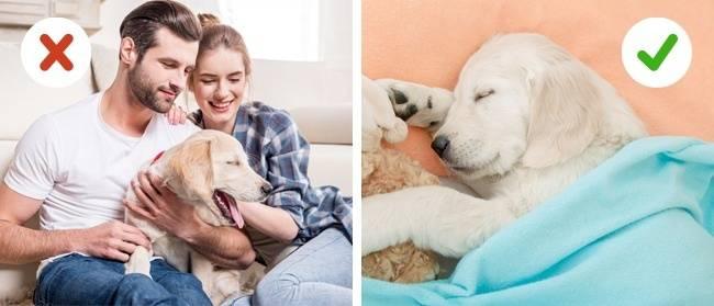 10ошибок, которые совершают все владельцы домашних животных
