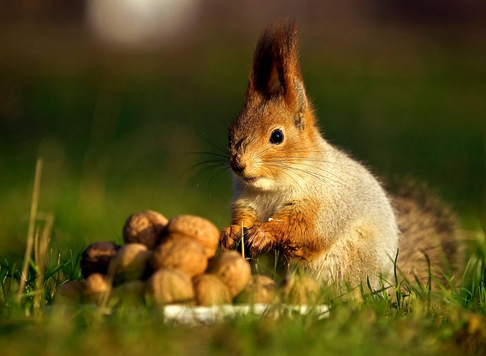8 животных, которые намного умнее, чем вы думали