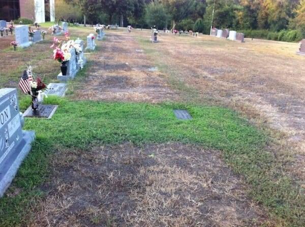 Трава у могилы солдата неожиданно стала зеленой. Но вскоре его мать поняла, в чем причина...
