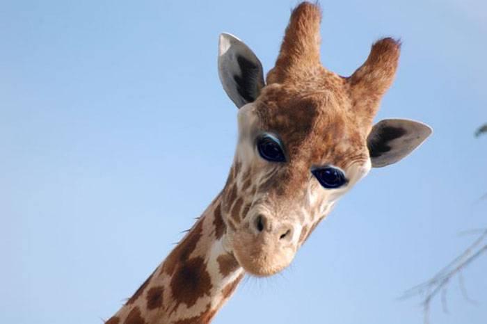 Что было бы, если бы у животных глаза были спереди