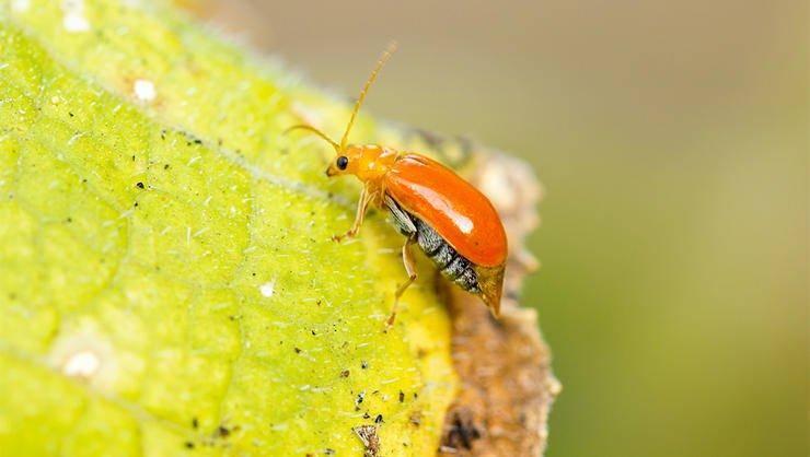 8 насекомых, которых вы едите, не подозревая об этом!