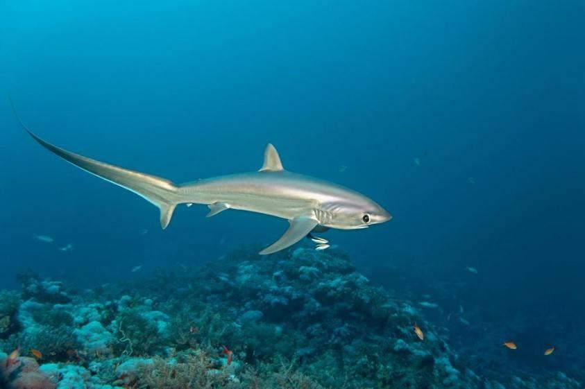 16 монстров из глубин океана, в существование которых сложно поверить