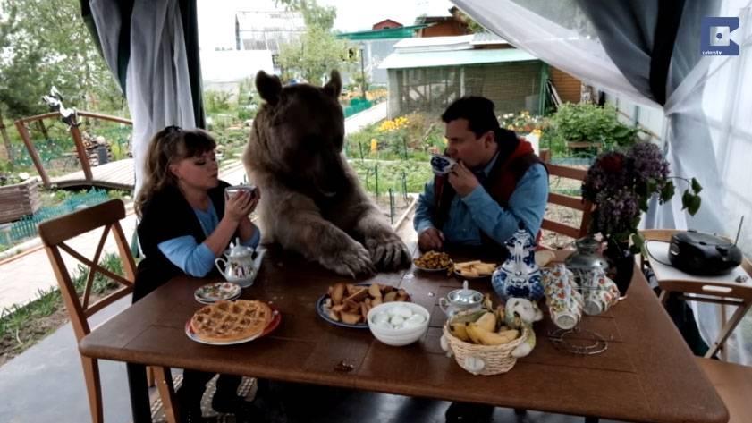 Русская семья держит дома 135-килограммового медведя!