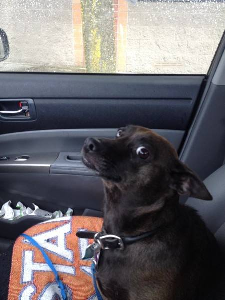 «К ветеринару?! Мы так не договаривались». Они не знали, куда их везут…