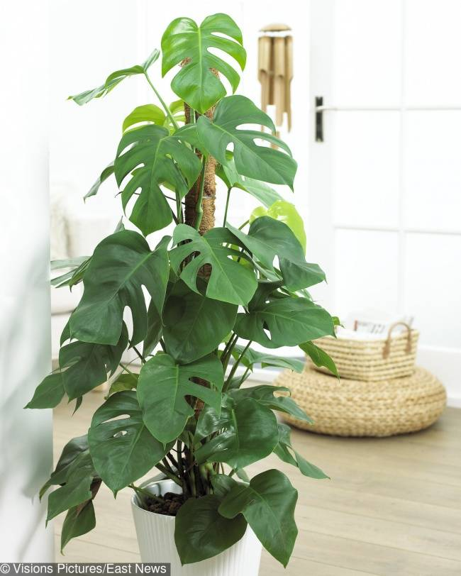 15ядовитых растений, которые скорее всего есть увас дома