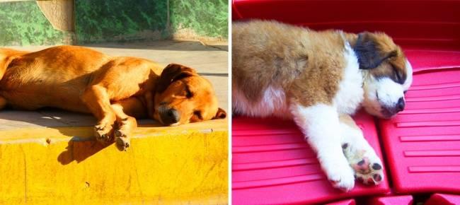6поз для сна, которые помогут лучше понять вашу собаку