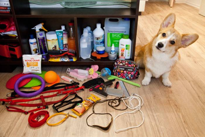 7 важных вещей, без которых не стоит заводить в доме животное
