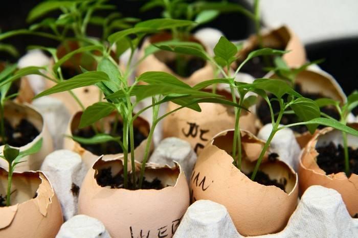 Вредные советы из интернета: 5 популярных лайфхаков для сада, которые совсем не работают