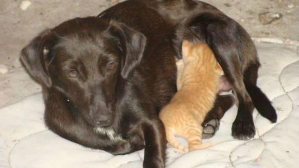 Собаки и кошки-мамы, которыми можно иллюстрировать -радость материнства-