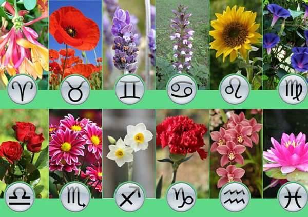 Цветочный гороскоп: какое растение подходит вашему знаку Зодиака
