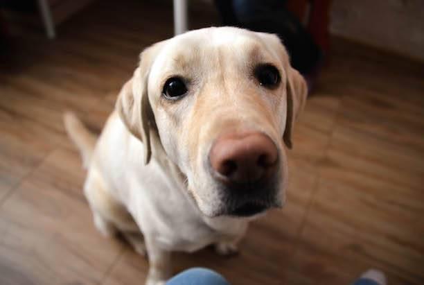 -Будь моими глазами- Как собака становится другом незрячего человека