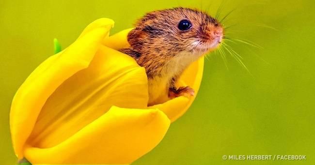 13невероятных фотографий мышат, которые избавят отплохого настроения засчитанные секунды