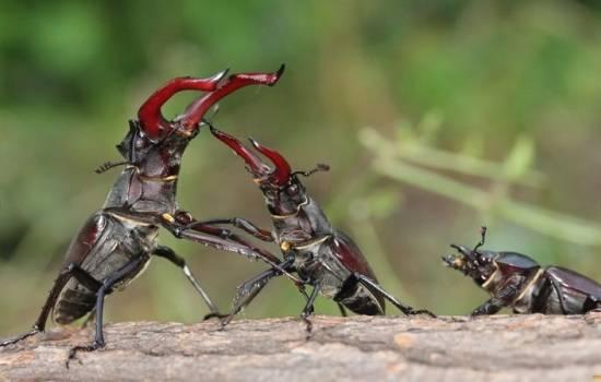 К чему снятся жуки сонник Миллера, Юнона, на теле, в волосах много, колорадские, клещи, личинки