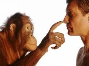 Люди, животные, любовь, измена и полигамия