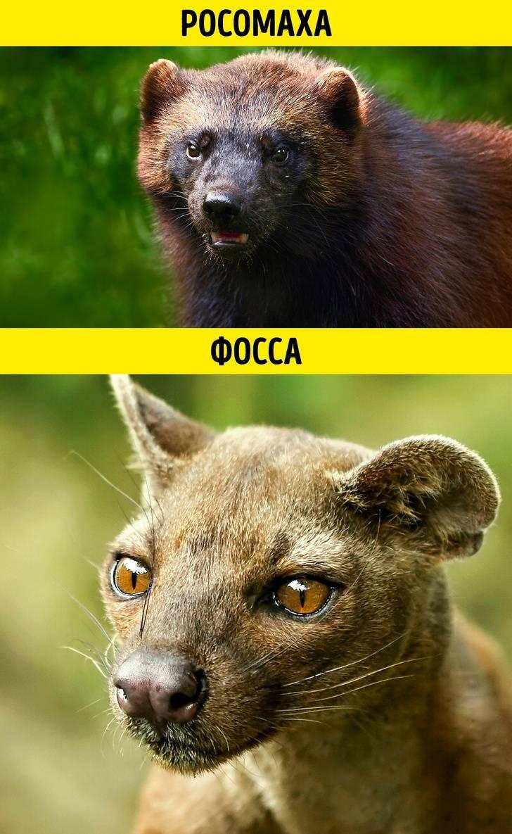 Суперсложный тест, который покажет, можетели выотличить одно животное отдругого