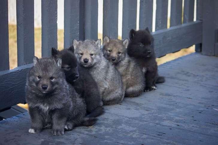 25+фотографий детенышей диких животных, которые собрали всоцсетях больше лайков, чем щенята икотята