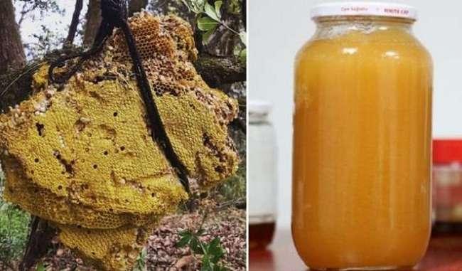 Безумный мед - продукт с непредсказуемым влиянием на организм, за который гурманы готовы выложить целое состояние