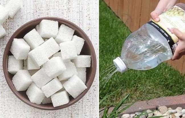 Будничная причина, по которой стены домов иногда нужно поливать сахарным сиропом