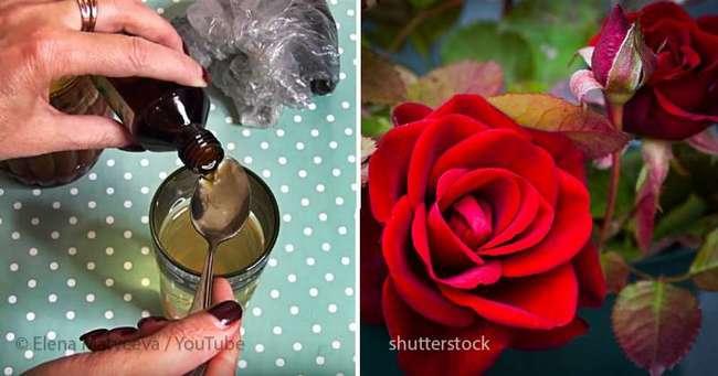 "Видеоблогер: ""Опробуйте рецепт маминой -Тройчатки- для проращивания роз. Суперсредство, девочки!"""