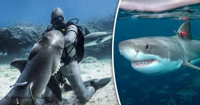 Где могут съесть туриста: где водятся акулы и какие из них опасны?