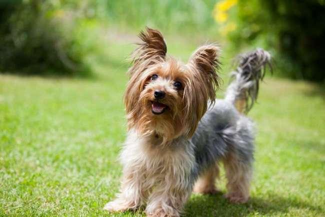 6 пород собак, которые лучше всего подходят для квартиры